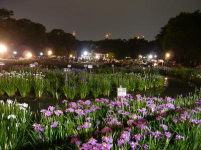 城北公園の花菖蒲ライトアップ(大阪市旭区)