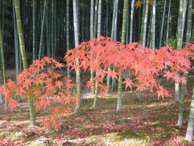 2006(平成18年)/11/29 秋の京都/嵐山 ★