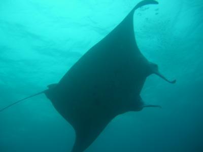 2008 梅雨の石垣島ダイビング