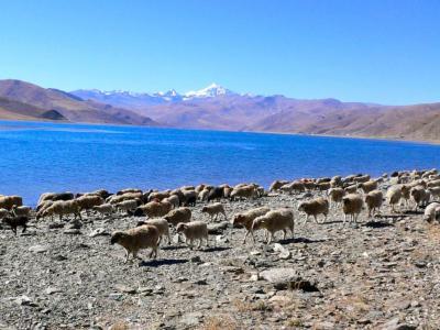 2006年新春チベットの旅