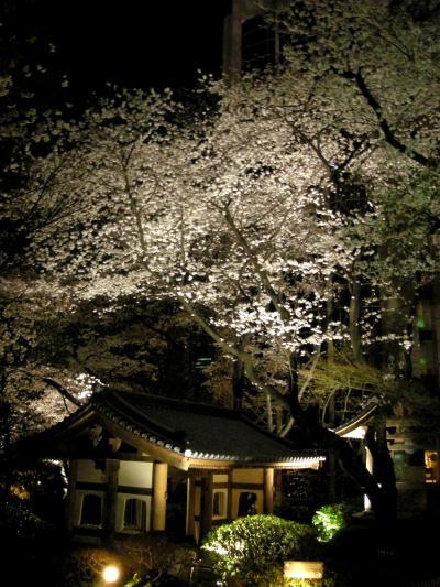 東京お散歩日記 ~ 2008年3月 品川駅周辺夜桜見物