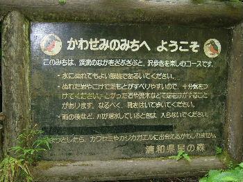 かわせみのみち:清和県民の森