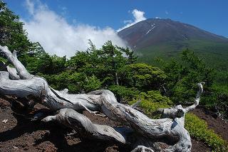 涼しさを求めて富士山奥庭ハイク。