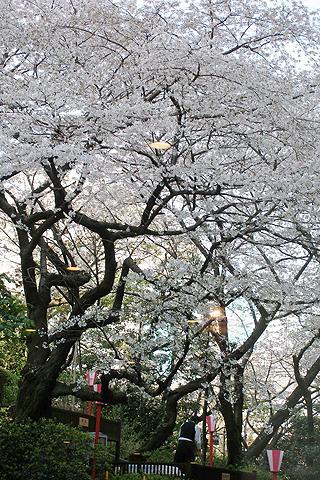 '08 満開の桜と高輪時間@「グランドプリンスホテル高輪」