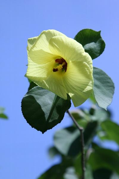 庭の片隅で・・0807★夏咲く草花・花木類