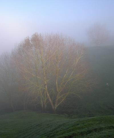 夜明けはいつもミルク色の霧に包まれて~ワイカトで農場滞在