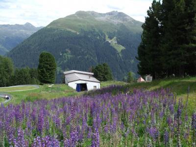 スイス・オーストリアでハイキングの旅【12】シャッツアルプ
