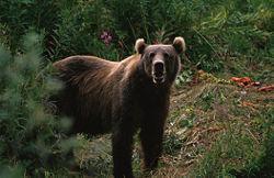 B級グルメ 熊