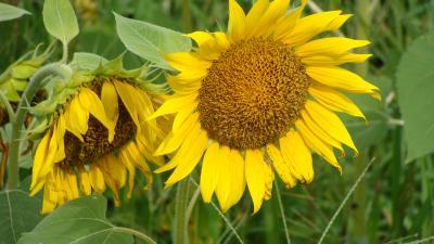 花の都公園 無料区域の花たち