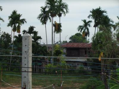 2008年タイ旅行---7  ☆9月1日その4
