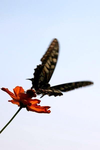 小さな旅●初秋の愛知牧場-2 野花や花壇の花