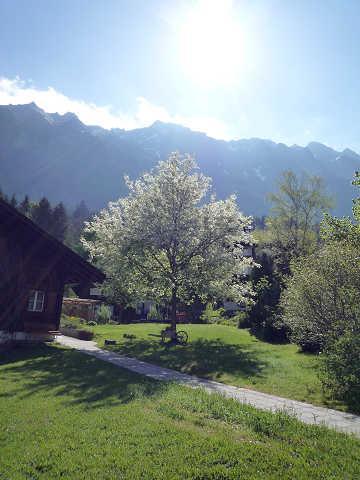 初めての母&娘 ドイツ・ロマンチック街道~スイスの旅4 【ウェンゲン~トゥーン】