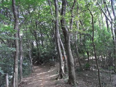 狭山丘陵を歩く~トトロの森~