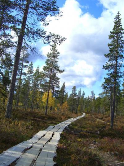 フィンランド旅行記・3(2008年 サーリセルカ編)