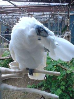 たくさんの鳥さんに会う旅 CAK限定開放