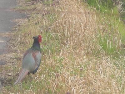 33京丹波町秘密基地 2008年度お客さん・・・鳥さん・他さん