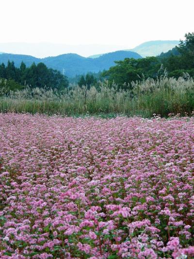 JTB旅物語を利用して・・・?恒例の早朝散歩 田沢湖高原