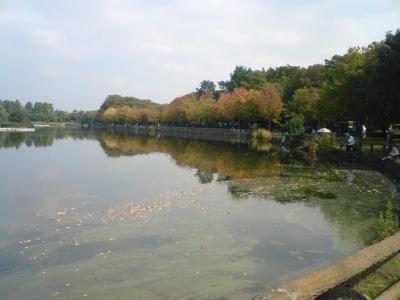 浮間公園の四季 初秋