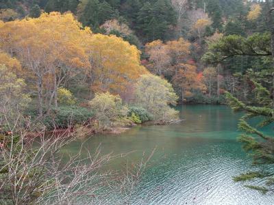 紅葉の志賀高原