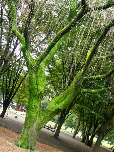 【近郊6】都立府中の森公園のウォーキング