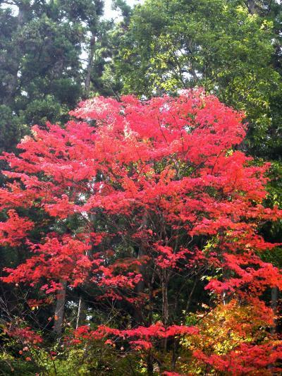 秋だ!温泉だ!紅葉だ~「鬼首」紅葉編♪♪