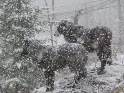 2008年10月北海道一周レール&レンタカーその8 旭山動物園