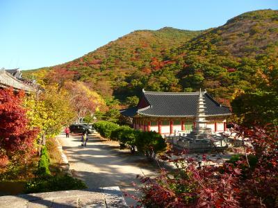 ジロの釜山散歩 2008秋
