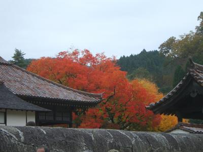 岡山・紅葉祭り
