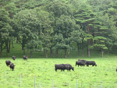 盛岡周辺温泉旅行。。。その5「小岩井農場」