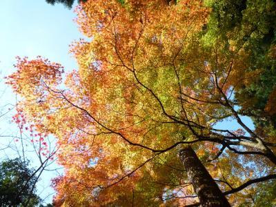 山中温泉から白山へ・紅葉を!