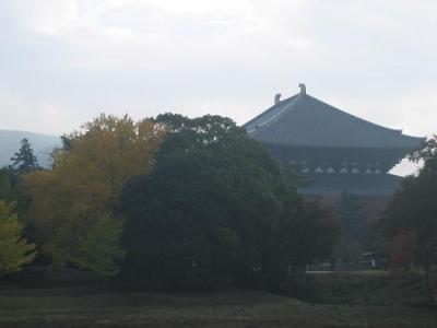 東大寺の銀杏。