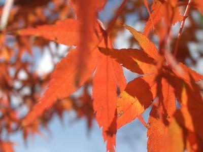 紅葉をもとめて愛・地球博記念公園を散歩する