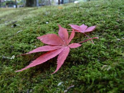 奈良公園、紅葉踏み分け・・・
