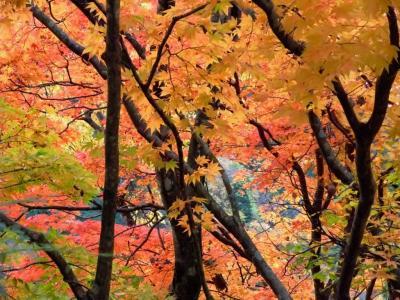 紅葉を探しに板取渓谷~川浦渓谷へ