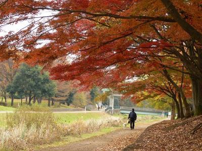 Nature Garden ~2008晩秋~
