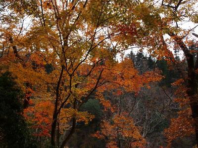 菊池渓谷の紅葉と阿蘇山周遊の旅