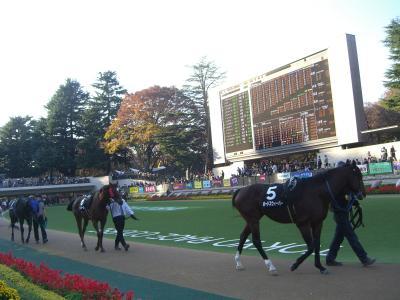 東京競馬場に行ってきました