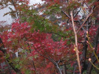 雨のミッドタウン紅葉散歩と夜のヒルズはX'mas気分  TOKYO - Roppongi