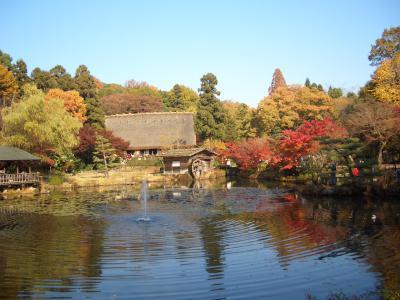 名古屋東山動植物園の紅葉散歩 (1)紅葉の遊歩道