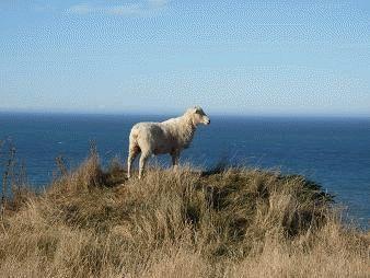ニュージーランド・南島あちこち 6~フランツジョセフ→トランツアルパイン