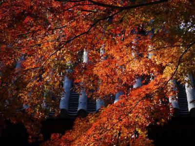 紅葉回廊・喜多院