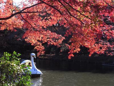 日本の秋を探して、井の頭恩賜公園へ