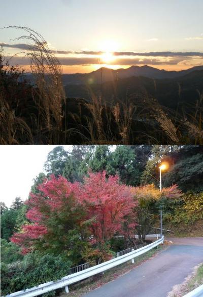 島田市、千葉山の遅すぎた紅葉