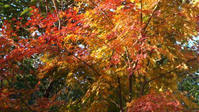 松川湖畔に紅葉を求めて