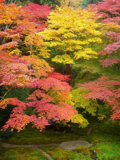 紅葉の古都 京都(洛北:八瀬~瑠璃光院)