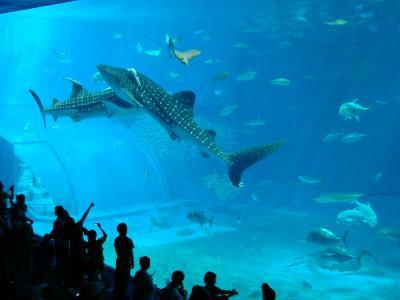 2008年10月 まだ夏の沖縄へ−15 海洋博公園