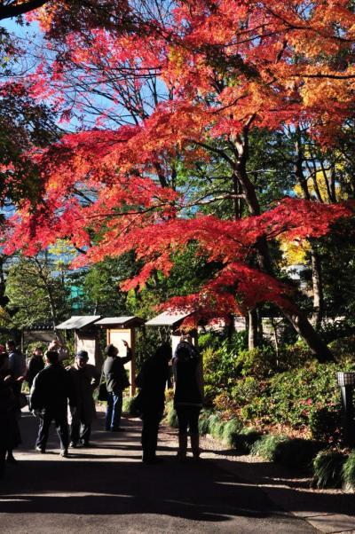 今年最後の紅葉@小石川公園