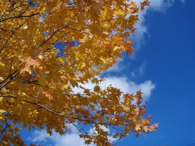 [2008年10月] 蓼科、北横岳の紅葉は終わっていました・・・