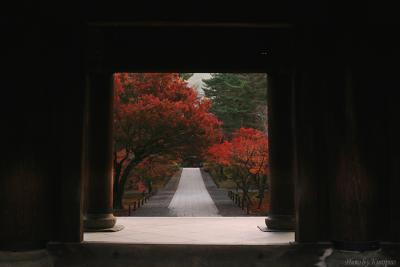 紅葉の京都を訪れる。。臨済宗南禅寺派大本山、南禅寺。国の重要文化財、三門から紅葉を望む