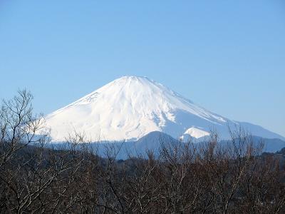 富士山には菜の花が似合う 湘南 吾妻山−1 2009